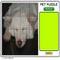 play Pet 100